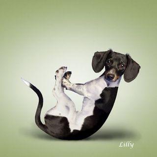 Yoga-dogs-8