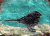 Little_bird_2